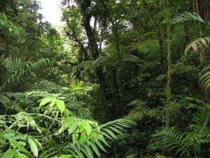 Consultoría en Medio Ambiente Mexico
